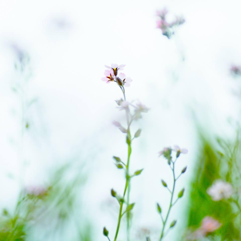 今日のおすすめパーツ:ピンクのお花