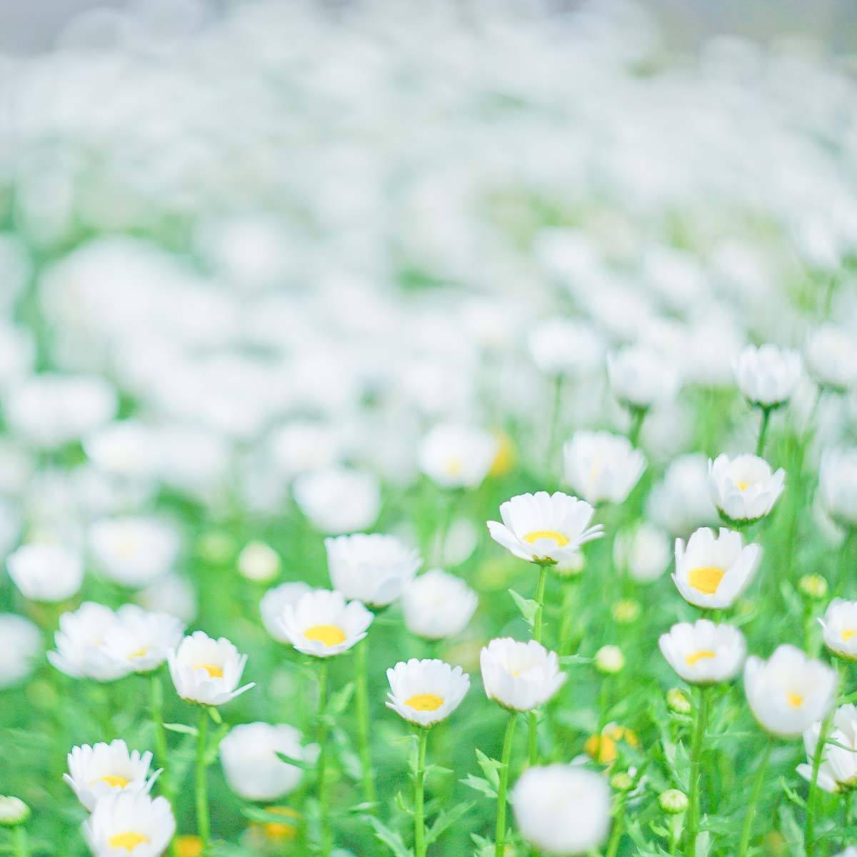 お花パーツ